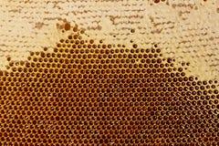 Textura de las células de la miel Fotografía de archivo