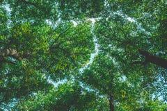 Textura de las coronas de los árboles imagen de archivo