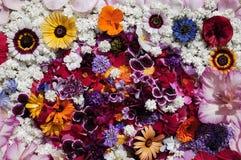 Textura de las flores Foto de archivo libre de regalías