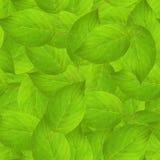 Textura de las hojas imagenes de archivo