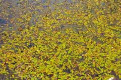 Textura de las hojas Fotos de archivo libres de regalías