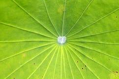 Textura de las hojas Imagen de archivo