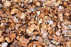 Textura de las hojas de la caída imágenes de archivo libres de regalías