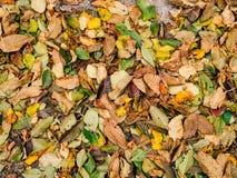 Textura de las hojas de otoño Hojas caidas amarillo en la tierra adentro Fotografía de archivo