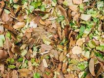Textura de las hojas de otoño Hojas caidas amarillo en la tierra adentro Imagen de archivo libre de regalías
