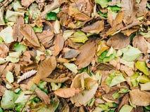 Textura de las hojas de otoño Hojas caidas amarillo en la tierra adentro Fotografía de archivo libre de regalías