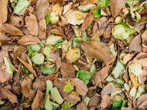 Textura de las hojas de otoño Hojas caidas amarillo en la tierra adentro Fotos de archivo libres de regalías