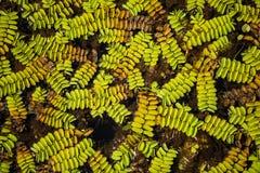 Textura de las hojas del verde en pantano Fotos de archivo