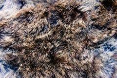 Textura de las lanas Fotos de archivo