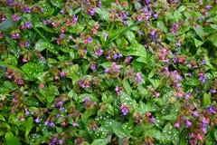 Textura de las pequeñas flores de la primavera imágenes de archivo libres de regalías