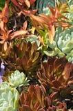 Textura de las plantas Fotografía de archivo