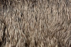 Textura de las plumas de una avestruz foto de archivo