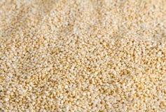 Textura de las semillas de la quinoa Foto de archivo