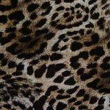 Textura de leopardo listrado da tela da cópia Imagem de Stock Royalty Free