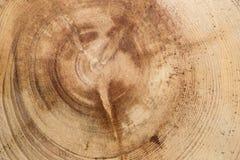 Textura de los anillos de árbol fotos de archivo