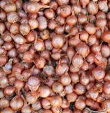 Textura de los bulbos de la cebolla Foto de archivo