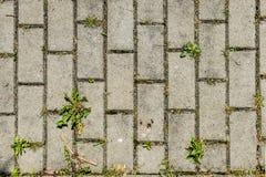 Textura de los coblestones del pavimento concreto en la acera con las pequeñas plantas verdes e hierba a través foto de archivo