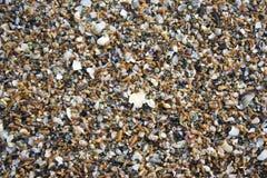 Textura de los mejillones Foto de archivo libre de regalías