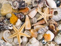 Textura de los shelles Fotografía de archivo
