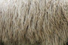 Textura de lãs Fotografia de Stock