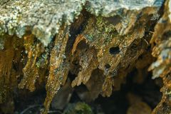 Textura de madeira Árvore seca, velha foto de stock royalty free
