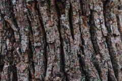 Textura de madeira áspera de uma superfície da árvore em uma floresta e em um teste padrão de madeira foto de stock