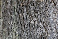 Textura de madeira áspera velha da casca Imagem de Stock