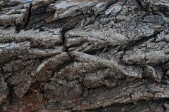 Textura de madeira 2 Foto de Stock