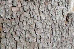 A textura de madeira fotografia de stock royalty free
