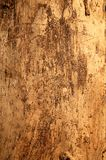 Textura de madeira. Fotos de Stock