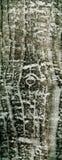 Textura de madeira abstrata do teste padrão Fotos de Stock