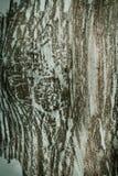 Textura de madeira abstrata do teste padrão Foto de Stock