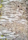 Textura de madeira antiga da casca Fotografia de Stock