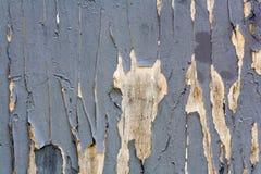 Textura de madeira azul da prancha Fotos de Stock Royalty Free