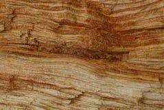 Textura de madeira de Brown de uma parte de madeira Fotos de Stock