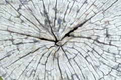 Textura de madeira Center Foto de Stock Royalty Free