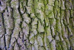 Textura de madeira cinzenta na crosta velha fotografia de stock royalty free