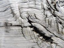 Textura de madeira cinzenta natural Fotos de Stock