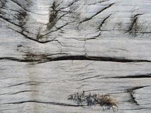 Textura de madeira cinzenta natural perfeita Foto de Stock Royalty Free