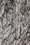 Textura de madeira cinzenta Uma placa idosa imagem de stock