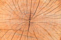Textura de madeira com anéis de crescimento dos anéis de árvore Imagens de Stock