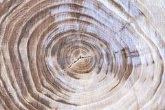 Textura de madeira com anéis de crescimento dos anéis de árvore Fotos de Stock