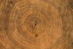 Textura de madeira com anéis de crescimento dos anéis de árvore Fotografia de Stock