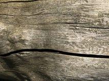 Textura de madeira com bom detalhe das quebras Fim da casca de árvore Tiro macro Imagem de Stock Royalty Free