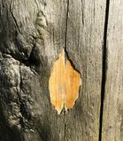 Textura de madeira com bom detalhe das quebras Fim da casca de árvore Tiro macro Foto de Stock Royalty Free