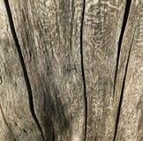 Textura de madeira com bom detalhe das quebras Fim da casca de árvore Tiro macro Fotografia de Stock