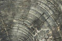 Textura de madeira com folhas secadas Fotos de Stock Royalty Free