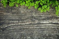 Textura de madeira com grama Foto de Stock Royalty Free