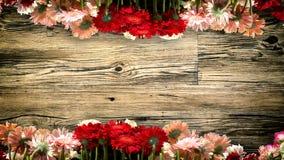 Textura de madeira com ornamento da flor fotografia de stock