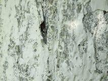 Textura de madeira com pintura branca Fotografia de Stock Royalty Free